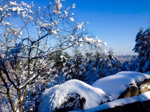 Séjour au ski : que manger pour devenir champion de la glisse