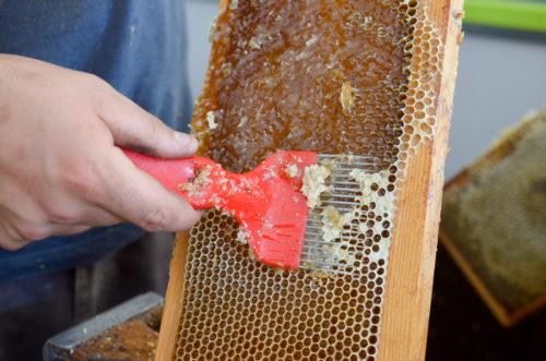 Le miel et les abeilles ... décryptés par Les Délices au Miel