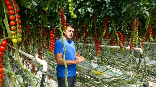 Producteur de Prince Bretagne Tomate